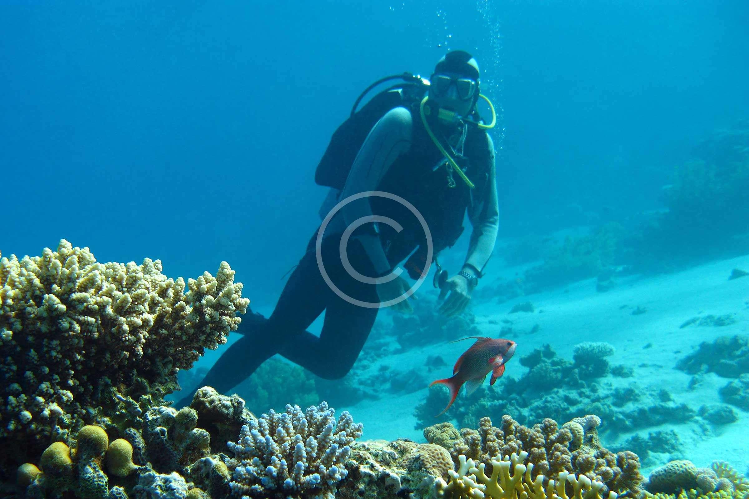 Underwater Family Photoshoot